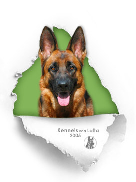 German Shepherd female Nemka - Kennels von Lotta
