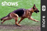 German Shepherd Shows Gallery