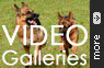 Our German Shepherd Dogs Videos